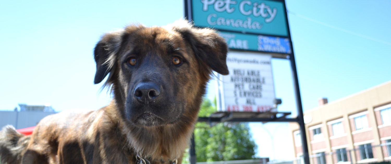 pet city canada