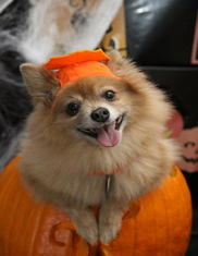 How to Keep Your Pets Safe on Halloween Pet City Canada