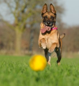 4 Essentials to Consider Before Becoming a Dog Owner If You Have Children